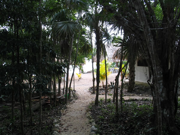 Forest garden of Laguna Azul
